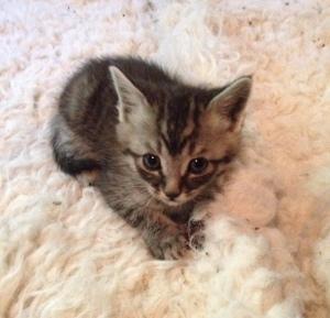 Baby Kitty 1
