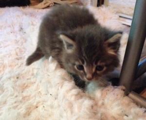 Baby Kitty 2