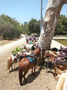 Ponies resting