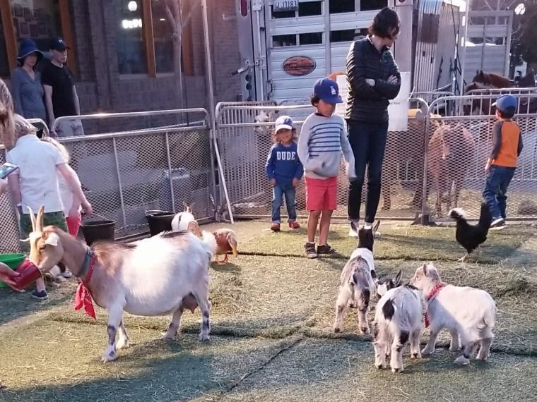 Petting Zoo_Monrovia
